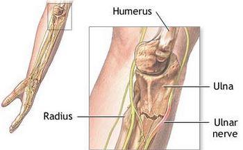 Anatomy physiology mblex exam 14 mblex test ulnar nerve ccuart Images