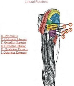 Lateral rotator